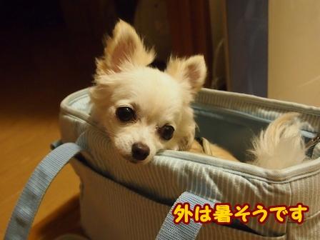 blog6673a.jpg