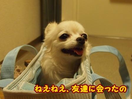 blog6676a.jpg