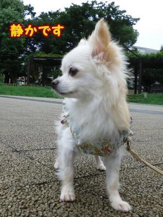 blog6726a.jpg