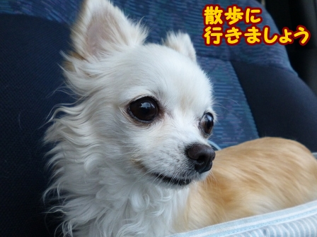 blog6801a.jpg