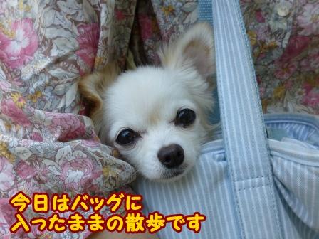blog6803a.jpg
