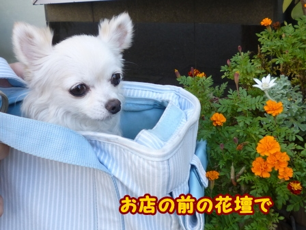 blog6804a.jpg