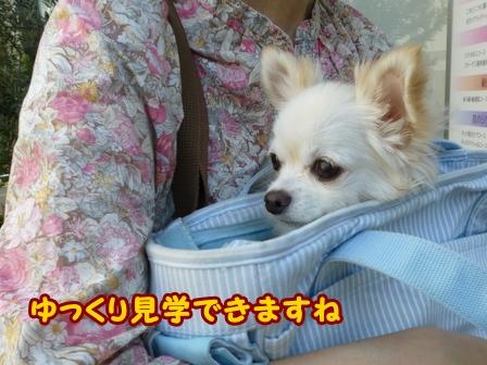 blog6805a.jpg