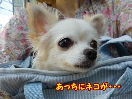 blog6806a.jpg