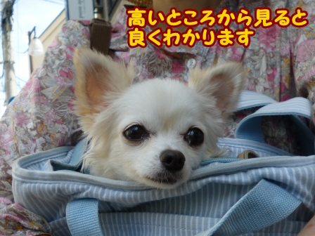 blog6807a.jpg