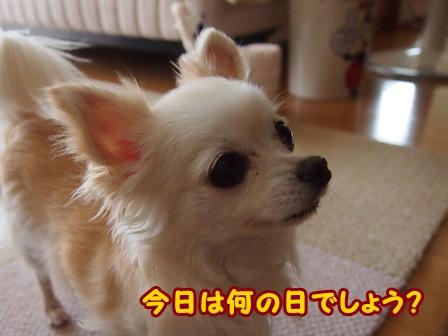 blog6837a.jpg
