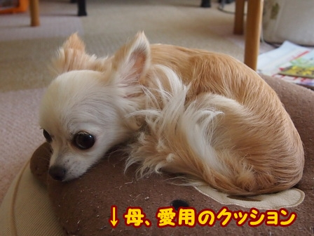 blog6843a.jpg