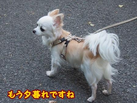 blog6849a.jpg