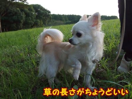 blog6851a.jpg