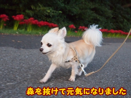 blog6855a.jpg