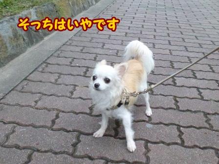 blog6873a.jpg