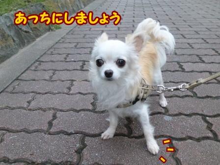 blog6874a.jpg