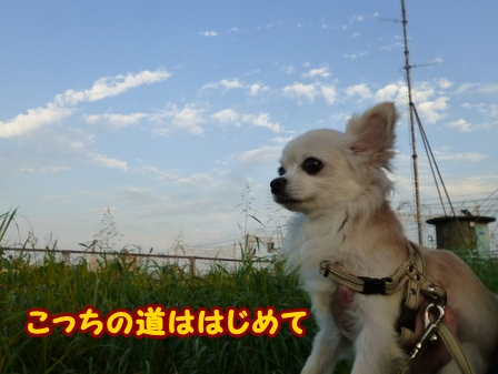 blog6886a.jpg