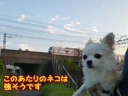 blog6887a.jpg
