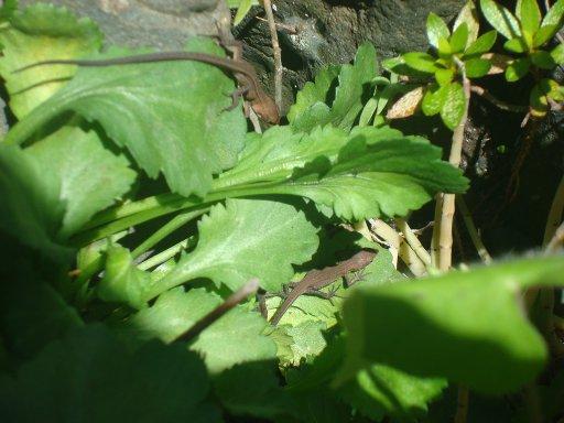 grass-lizard-8.jpg
