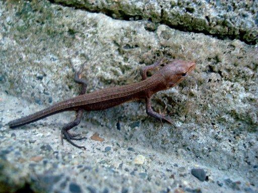 grass-lizard-9.jpg