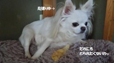 DSC_0290_convert_20150928111143.jpg