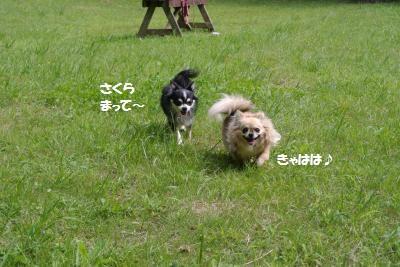 DSC_3991_convert_20150924161250.jpg