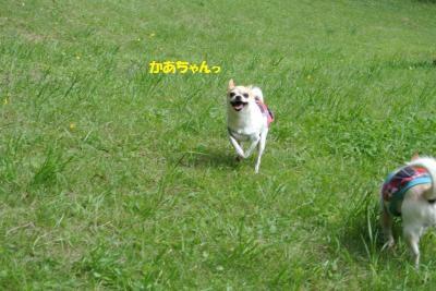 DSC_4015_convert_20150924161516.jpg
