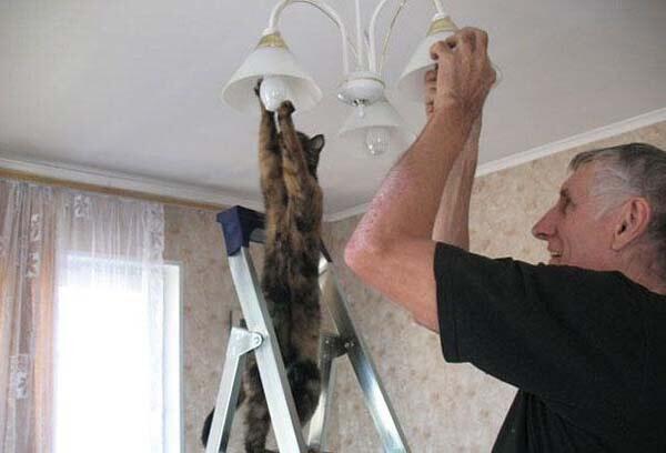 猫ちゃんのお手伝い