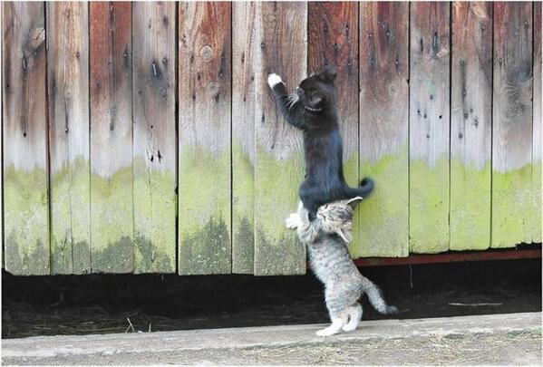 子猫ちゃんの協力プレイ