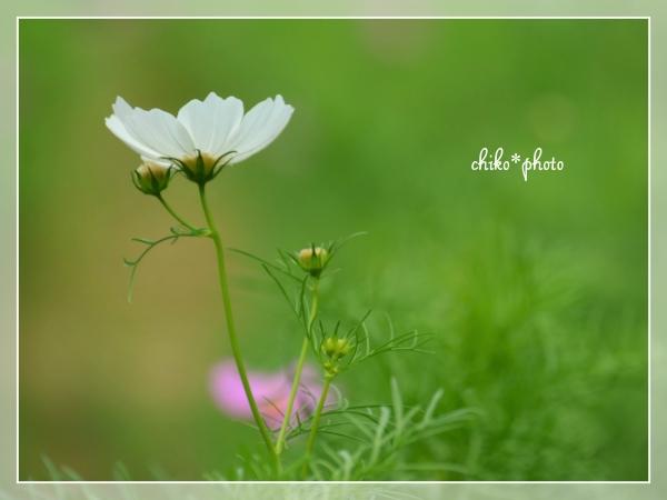 photo681-1.jpg