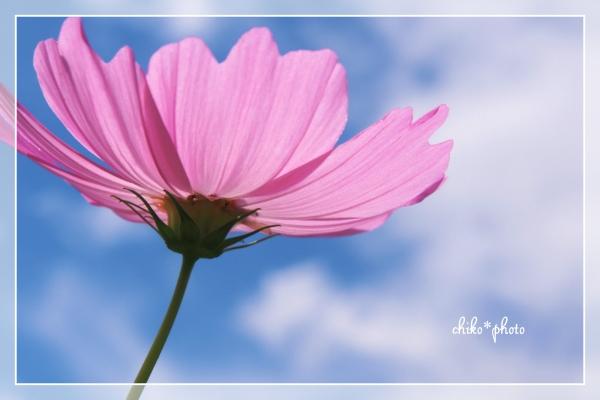 photo688-1.jpg