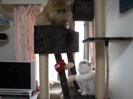 マリーとレオン