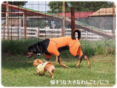 大型犬とバニラ