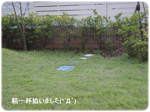 落ち葉拾い後の庭