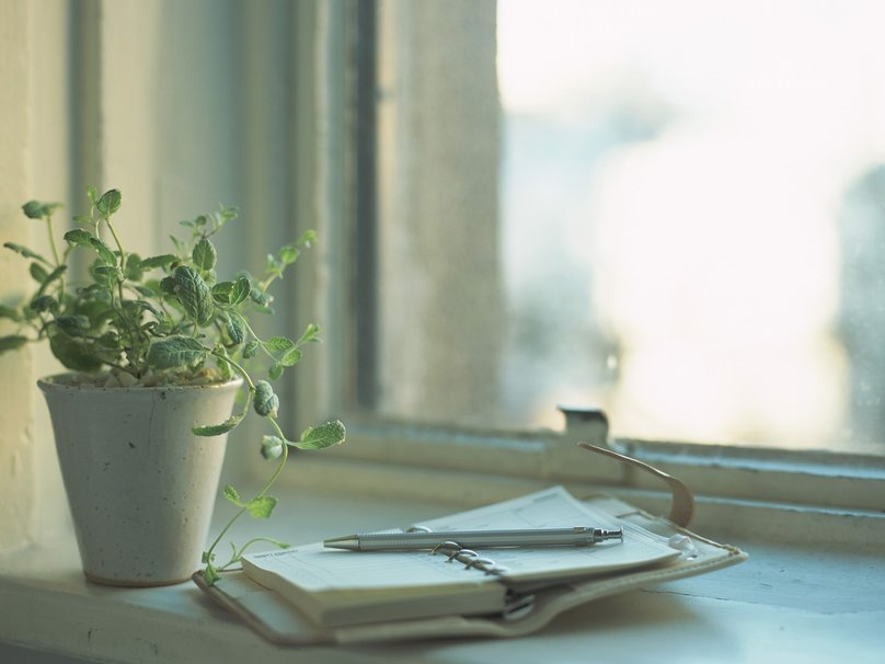 247681__window-flower-plant-notebook-diary-notepad-pen-reflection-light-day_p.jpg