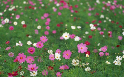 Field-of-Pretty-Wild-Flowers.jpg