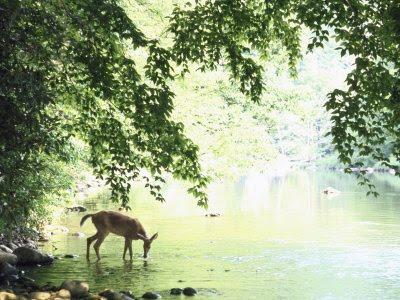 as-the-deer.jpg