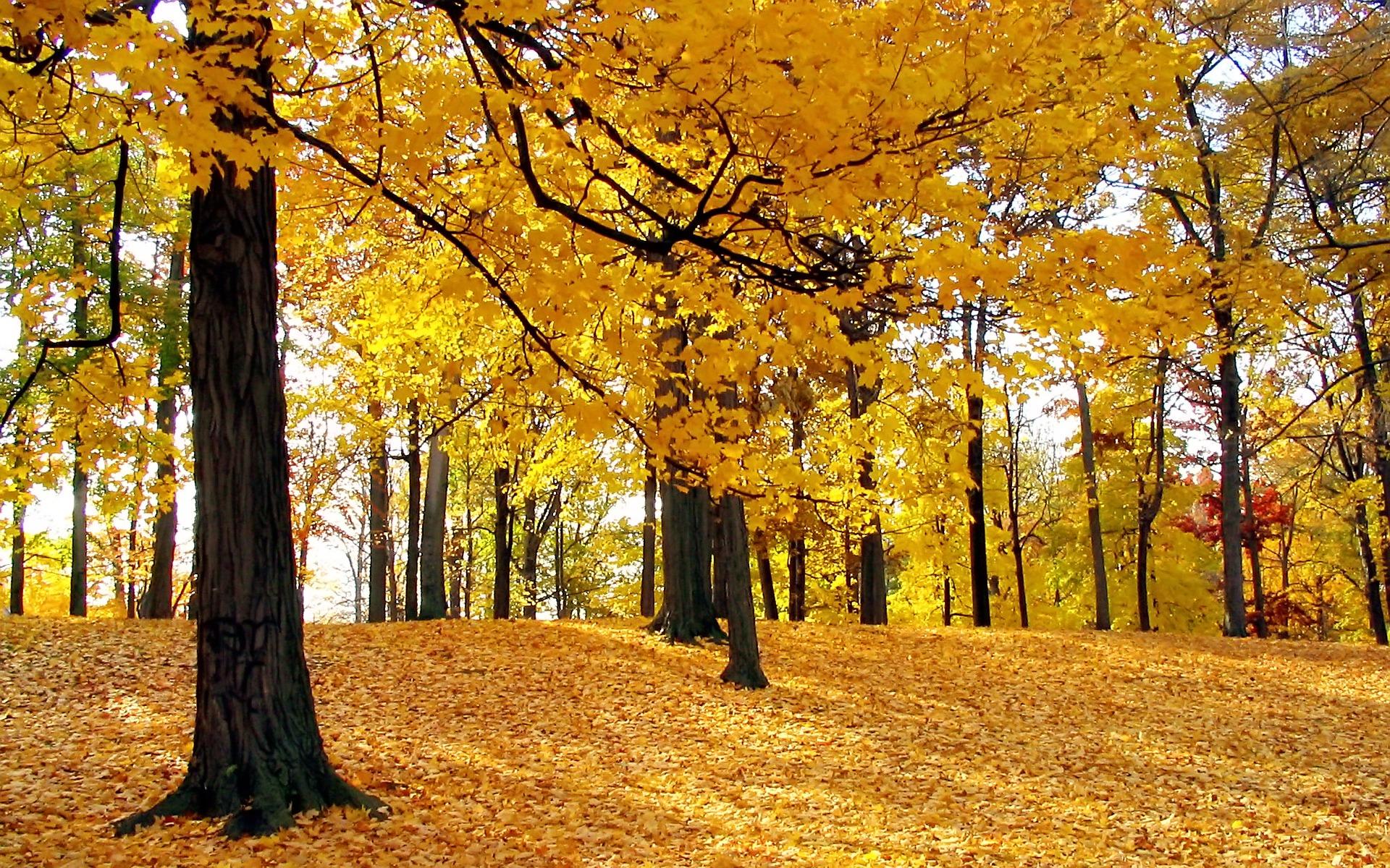autumn-trees-wallpaper-autumn-nature_00431167_20151004192535449.jpg