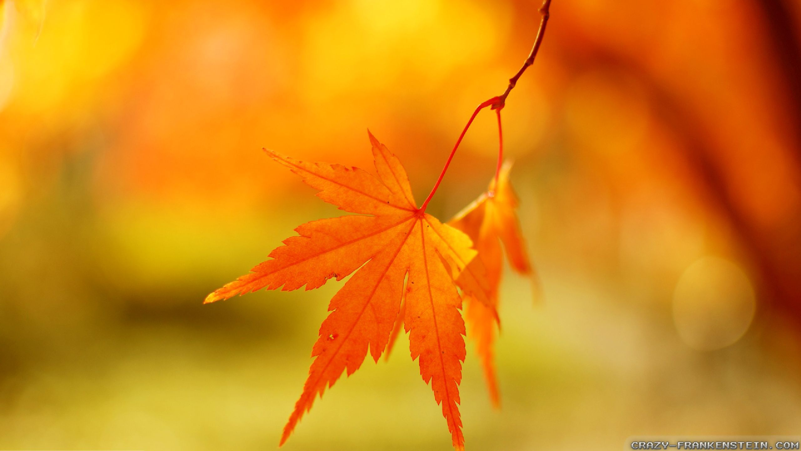 cool-color-autumn-leaf-wallpapers-2560x1440.jpg