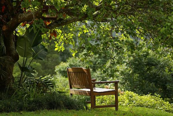forest_bench.jpg
