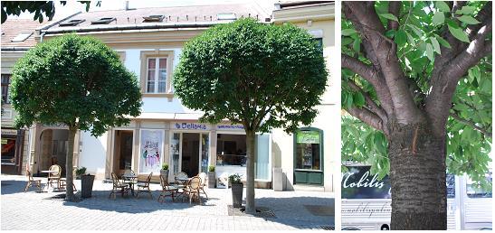 ハンガリーの街路樹A
