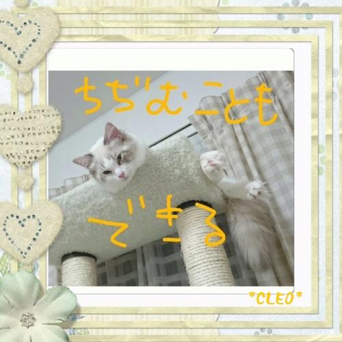 クレオ20150909IMG_3119