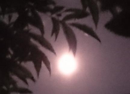 1286こもれ月光