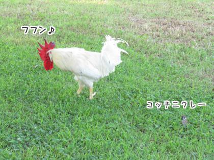 二太2015/09/12-5