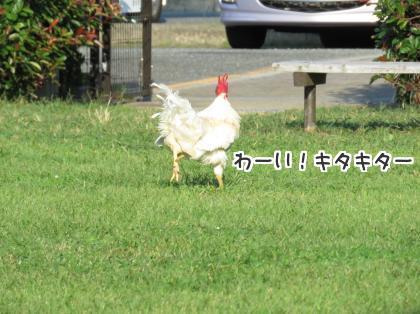 二太2015/09/24-1
