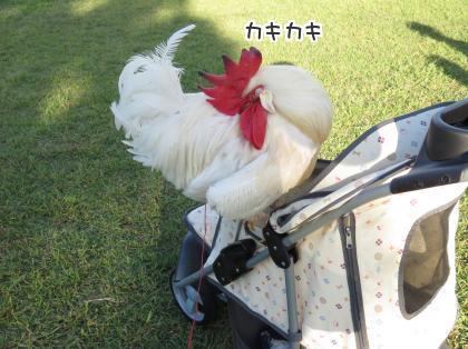 二太2015/010/04-5