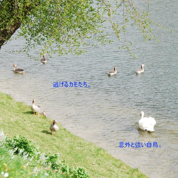 150907_1_7.jpg