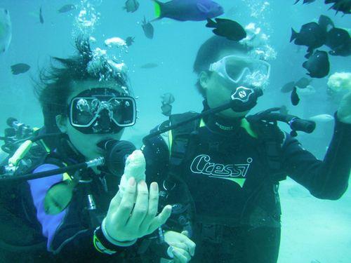 秋の沖縄穴場おすすめダイビングクチコミ貸し切りで家族夫婦カップルで潜れる