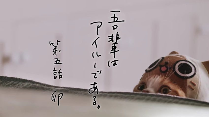 image_2828.jpg