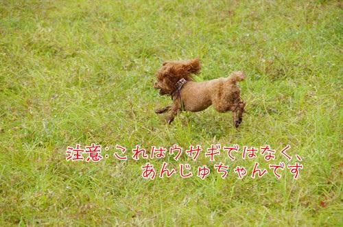 RK52F3636_R.jpg