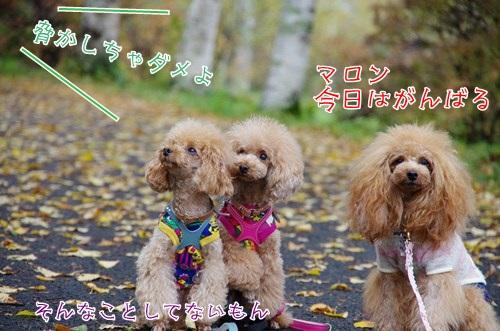 RK52F4646_R.jpg