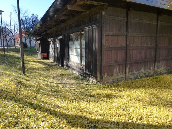 美しい黄色のイチョウの絨毯