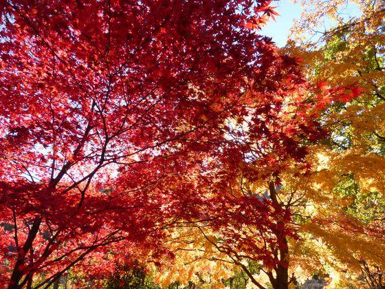赤、オレンジ…見事な紅葉模様