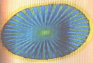 みどりの菊花太陽紋